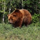 Выжившие. Зареченские грибники столкнулись лицом к лицу с медведем