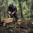 Пропавшего в Пензенской области грибника нашли живым и невредимым