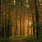 В Пензенской области уже четверо суток ищут мужчину, пропавшего в лесу