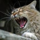 Разъяренная домашняя кошка напала на семью из четырех человек. Троих госпитализировали