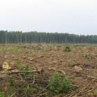 С 17 октября в Пензенской области незаконно вырубили лес  более чем на миллион рублей