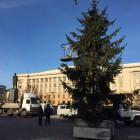 В Пензе на площади Ленина установили живую ель