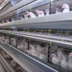 «Белинскую птицефабрику» обанкротят за долги