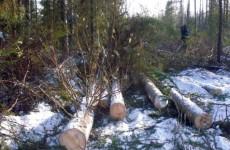 Лесному хозяйству Пензенской области нанесли ущерб на сумму более миллиона