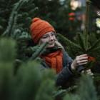 Мэрия просит пензенцев не покупать «левые» елки