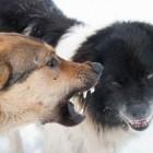Соцсети: «В Пензе в Заводском районе стая диких собак угрожает жизни детей»