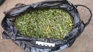 У жителя Белинского района нашли 216 грамм марихуаны