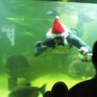 В Пензе Полицейский Дед Мороз забрался в аквариум к рыбам
