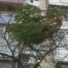Плохой Санта. Зареченец выбросил елку с седьмого этажа жилого дома