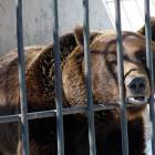 В Пензе в контактном зоопарке на женщину напал медведь
