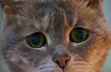 В Пензе кот вернулся с прогулки домой с пулевым ранением в голове