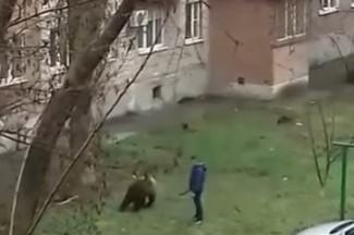 Медведица из Пензы заинтересовала ростовских полицейских