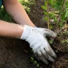 Пензенский филиал Россельхозбанка поддержит акцию по посадке деревьев