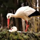 В Пензенском зоопарке начался весенний переезд