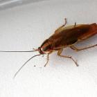 В пензенском магазине поселилась «армия» тараканов
