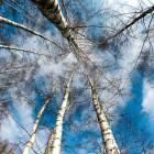 В Городищенском районе неизвестные незаконно нарубили деревья почти на 80 тыс. руб