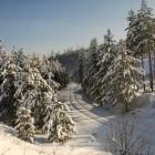 Пензенец выплатил 50 тыс. рублей за незаконную вырубку елок