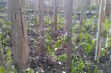 Похолодание существенно бьет по карманам пензенских огородников