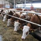 Пензенская область – вторая в ПФО по производству мяса