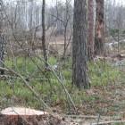 В Пензенской области мужчина «наломал дров» более чем на 100 тысяч