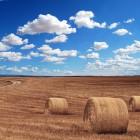 ВИП-сельхоз-опрос: будет ли Пензенская область голодать из-за холодной весны-2017?