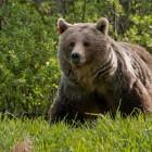 Состоялись похороны кузнечанина, которого жестоко убил медведь под Иркутском