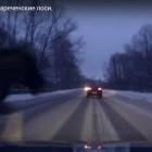 В Заречном лось врезался в автомобиль (видео)