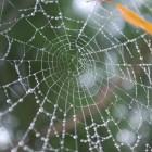 Пензенец озадачен таинственной окраской паука, увиденного им в городе