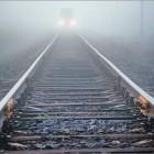 В поезде пензеских пассажиров сопровождали «усатые попутчики»
