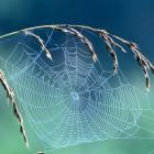 Пензенцев напугал паук c «пчелиными корнями»