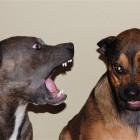 В Новосибирске депутаты запретили лаять по ночам собакам