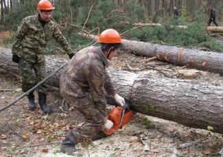 В Кузнецке лесорубы «наломали дров» на 60 млн. рублей