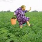В Пензе 73-летняя пенсионерка села в тюрьму за продажу наркотиков