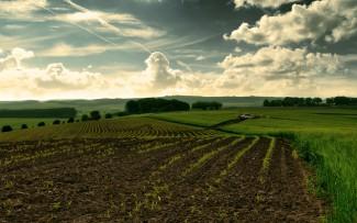 Из-за нарушений использования сельхозземли бюджет Пензенской области пополнился на 14,5 млн. руб