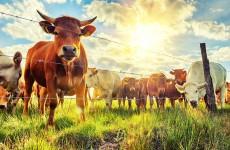 Пензенская область лидирует в ПФО в сфере развития животноводства