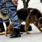 Пензенские силовики ищут телефонного террориста, сообщившего о бомбе в Пензе 7 ноября
