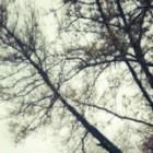 Опасное дерево угрожает жизни учеников школы №56 – пензенец