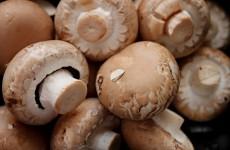 Белозерцев и Кулинцев вплотную занялись грибами