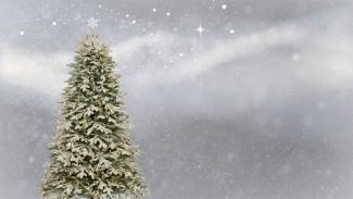 Новогодние ели будут подарены учреждениям Железнодорожного района