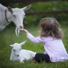 В Пензенской области дети стали чаще болеть педикулезом