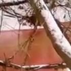 Глава пензенского Росприроднадзора назвал причину появления «багровой реки»