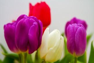Пенза снабдит москвичей цветами к празднованию 8 марта