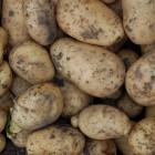 В Пензенской области мужчину приговорили к восьми месяцам «строгача» за кражу картошки