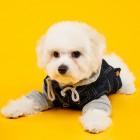 Догхантеры объявили охоту на пензенских собак