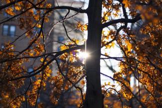 Жителя Пензенской области осудили за вырубку деревьев