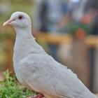 Пензенский школьник прославился на всю Россию драмой с голубем