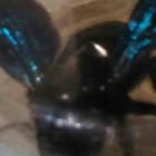 Пензенцев повергло в шок страшное насекомое - Соцсети