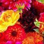 Cоветы астролога: «Какие цветы подарить на 8 марта родным и любимым»?