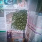 У 50-летнего жителя Пензенской области изъяли марихуану
