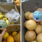 В пензенском магазине покупателям продавали цитрусовые с «живыми организмами»